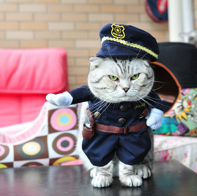 Costumes For Kitties